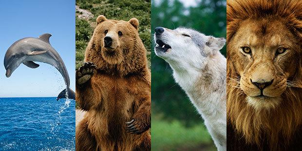 Узнайте, какой у вас хронотип: дельфин, лев, волк или медведь