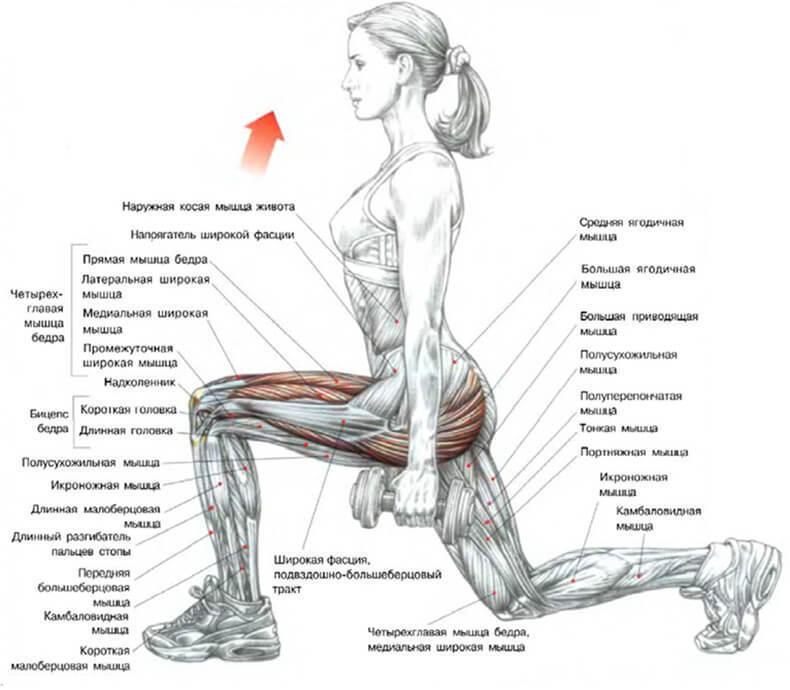 как избавиться от жира на животе упражнения
