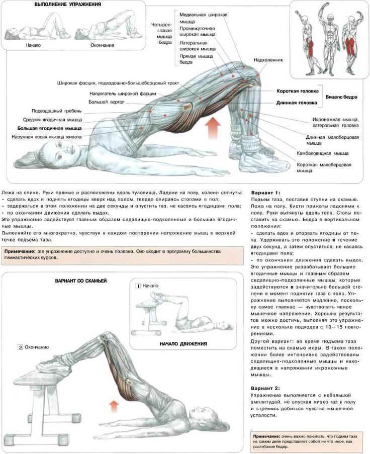 Мышцы человека попа
