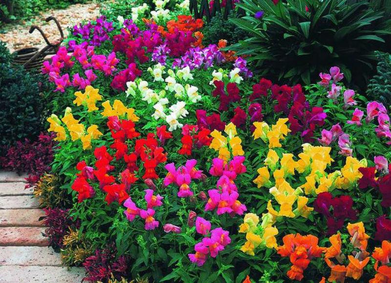 Где купить сортовые цветы для сада доставка цветов омск безналичный