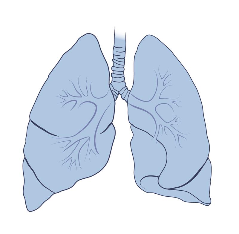 Лишние килограммы выводятся через... лёгкие