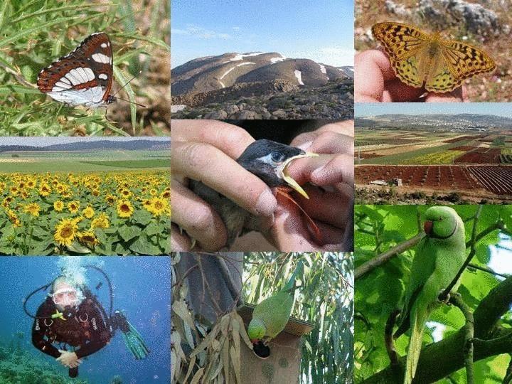74 проблема сохранения биологического разнообразия планеты