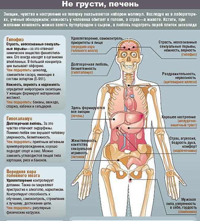 Обида в почках, жадность в кишечнике: болезнетворные эмоции