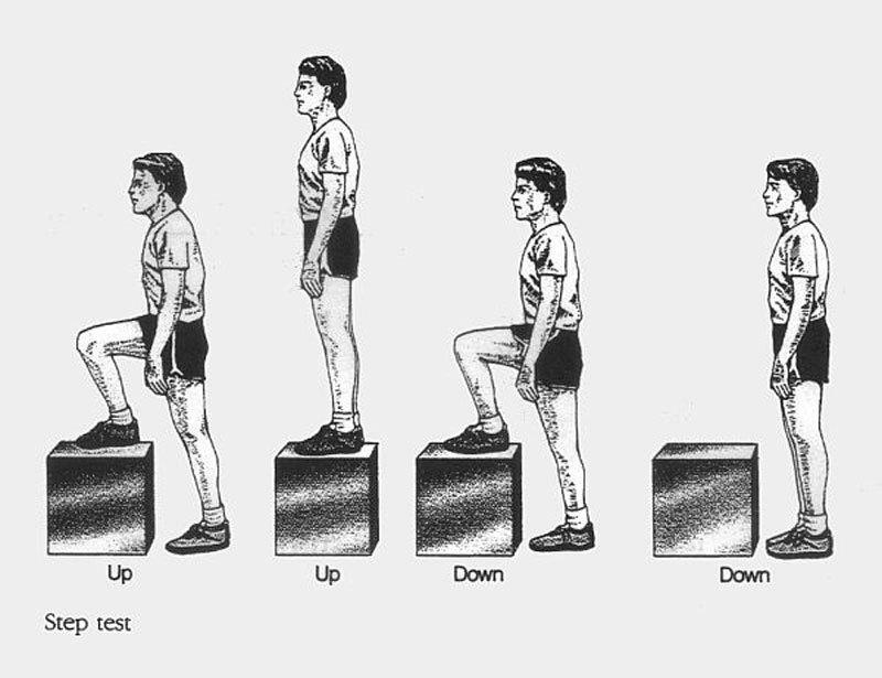 Гарвардский степ–тест: «Ступеньки» = тест на выносливость сердечно-сосудистой и дыхательной систем