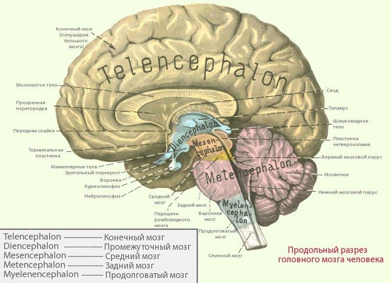 Что можно сделать для восстановления нервной системы?