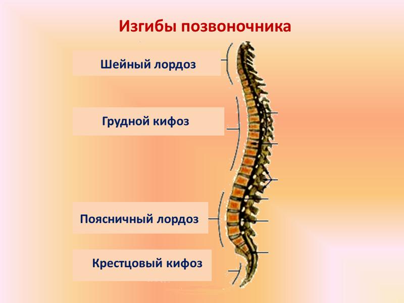 Патологический шейный кифоз лечение