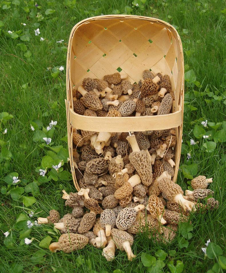 Что необходимо знать об отравлении грибами
