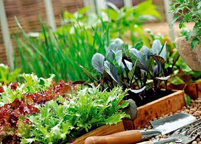 Время для посадки семян.