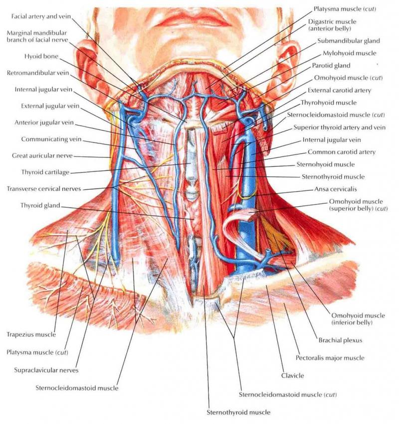 Боли в шее: 5 важных аспектов, о которых НУЖНО знать!