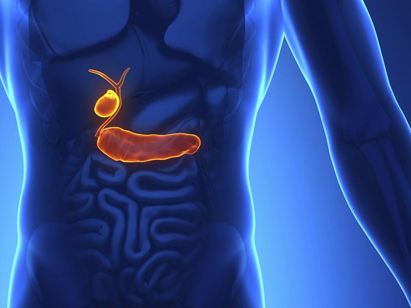 Желчный пузырь — дирижер работы внутренних органов