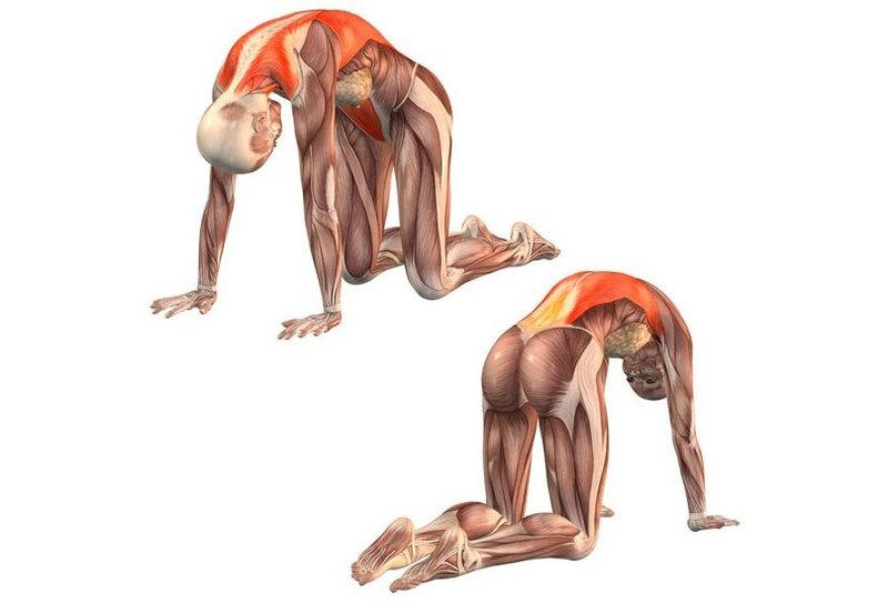 Упражнения при пояснично-крестцовом остеохондрозе