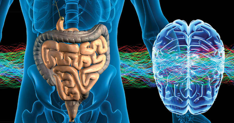 Головной мозг в ответе замысли, брюшной – за эмоции