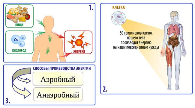 Иммунолог Тору Або: 2 причины ВСЕХ болезней