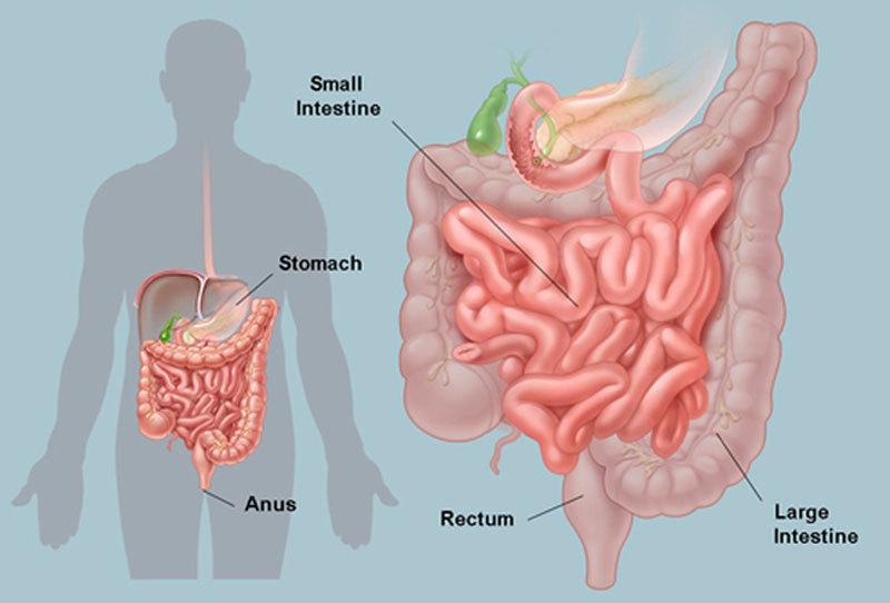 Поиск диета при кишечной аутоинтоксикации