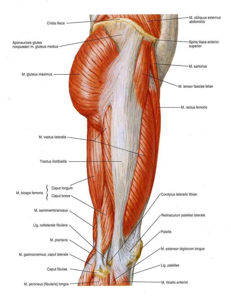Напряжение мышц всего тела