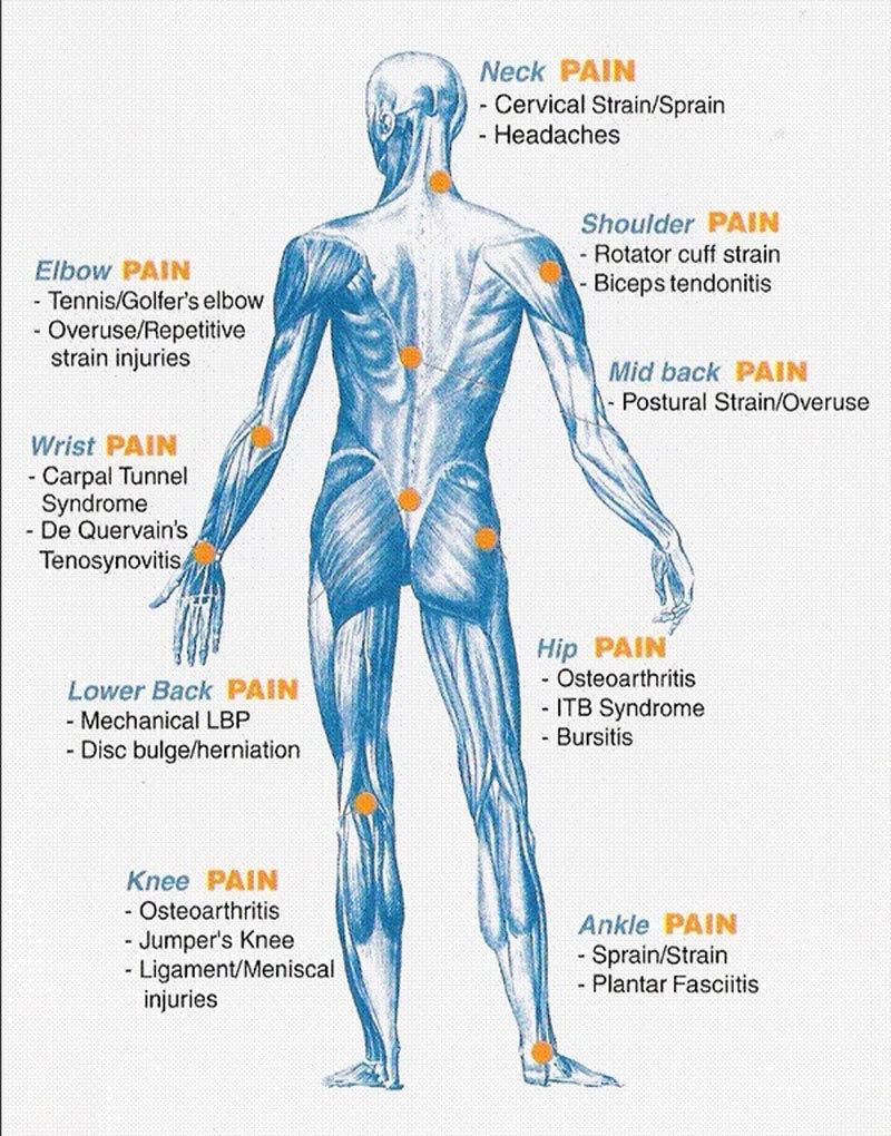 Unique Hip Bursa Anatomy Composition Human Anatomy Images
