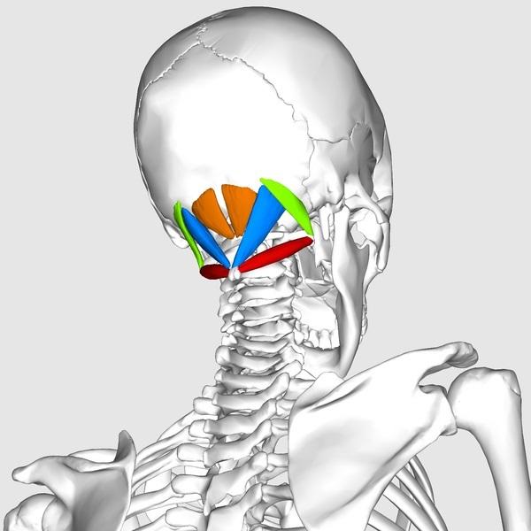 Зарядка для шеи чтобы не болела голова thumbnail
