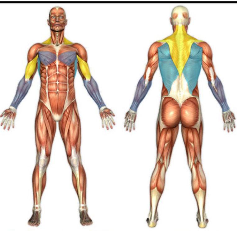 Упражнение «Весы»: снимаем мышечный панцирь!