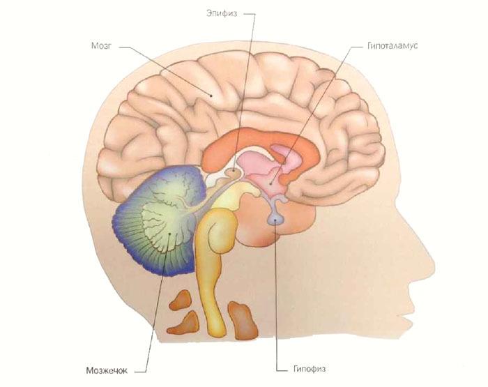 Мелатонин: гормон молодости и красоты