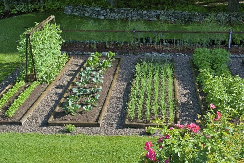 5 советов как создать огород своими руками