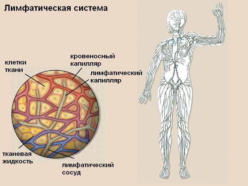 Нарушения лимфосистемы — это ВАЖНО знать ВСЕМ!