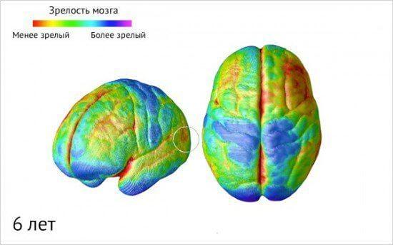 Как созревает детский мозг: что важно знать о этапах развития ребенка