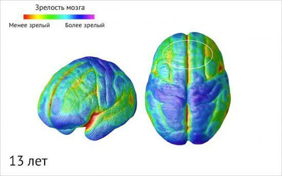 Как созревает детский мозг: что важно знать о этапах развити ребенка