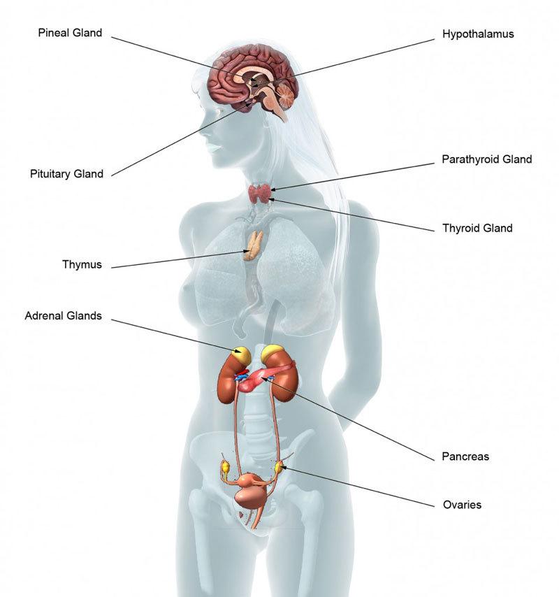 как повысить уровень хорошего холестерина в крови