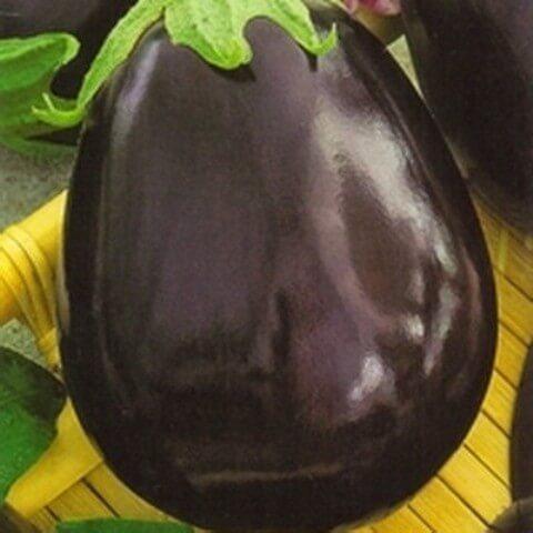 сорт баклажан без горечи и семян