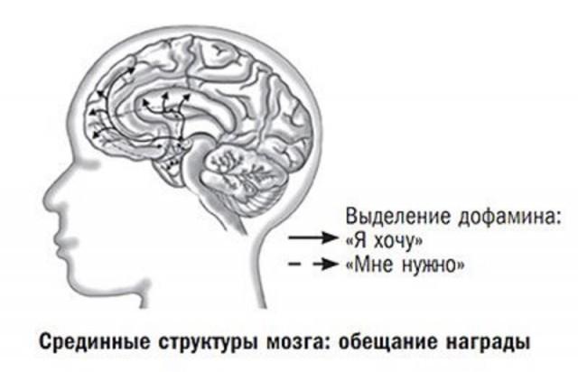 Величайший обман мозга: почему мы принимаем желание за счастье