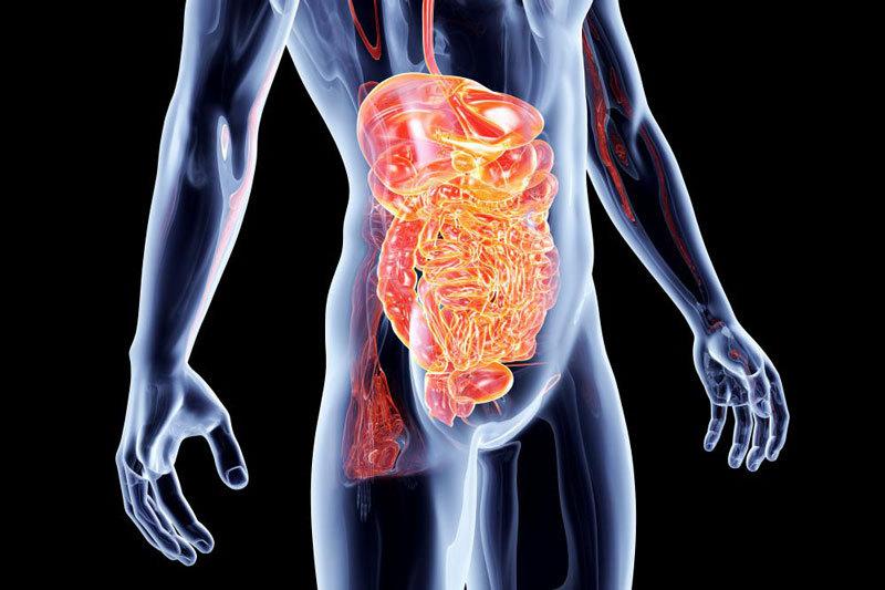 Прополис для лечения желудка и кишечника