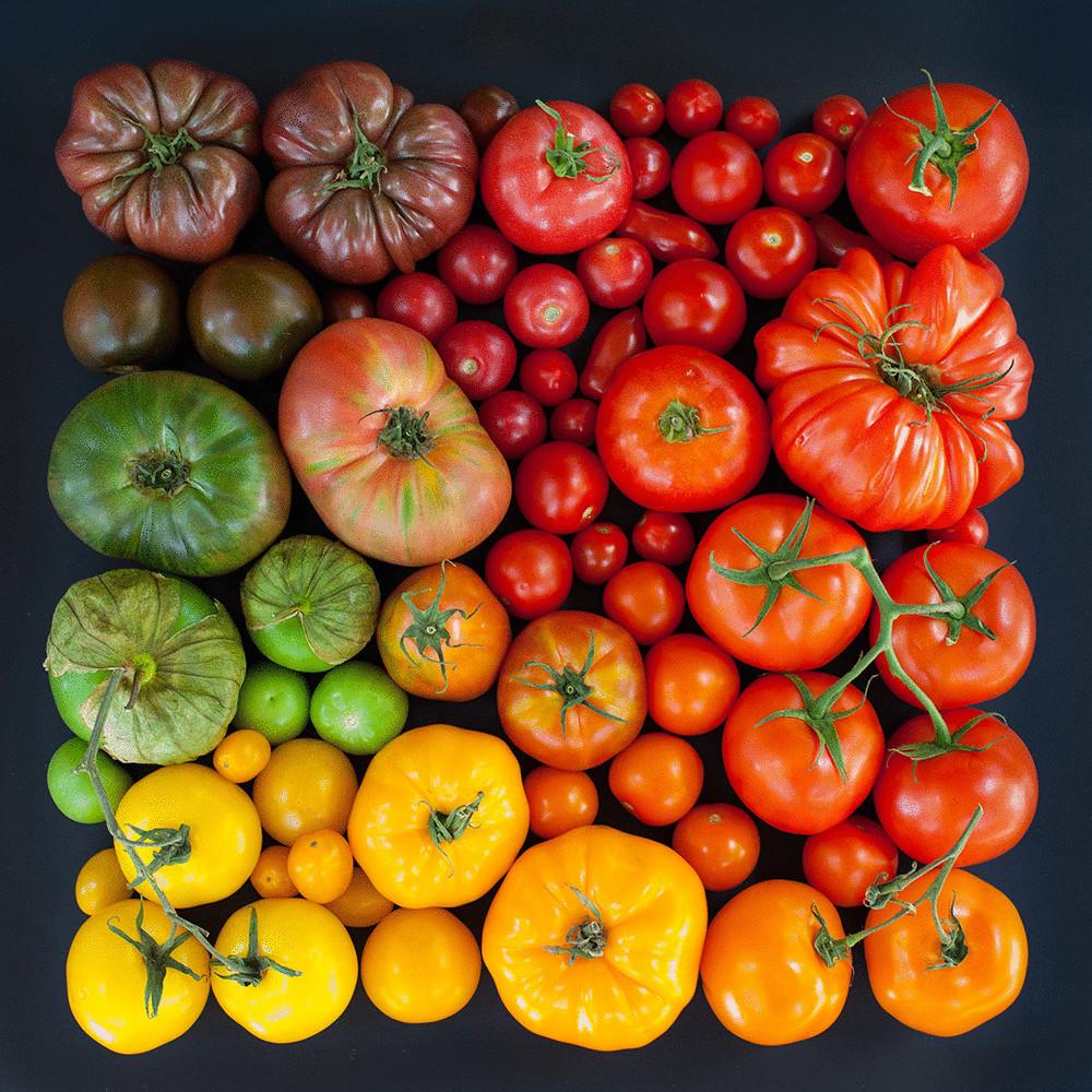 gradient_iz_pomidorov-08