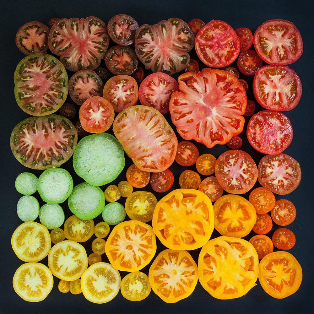 gradient_iz_pomidorov-05