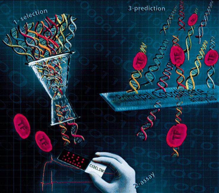Интересные факты из мира генетики. Читать мужчинам и женщинам!