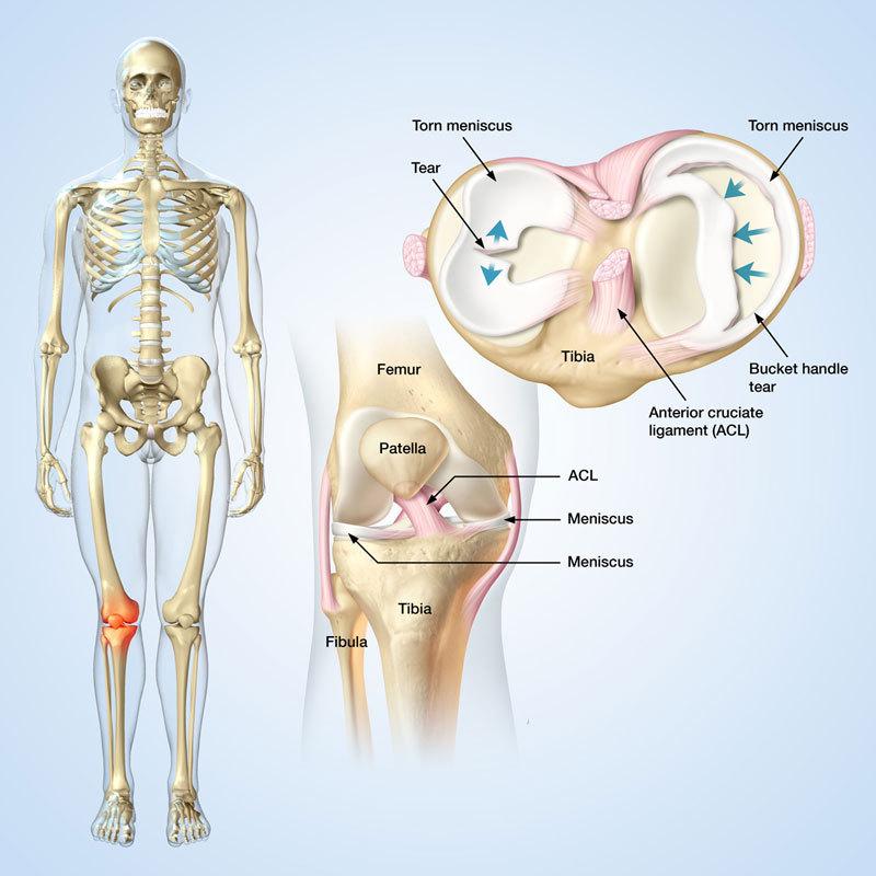 Черты характера и болезнь суставов шерсть моча сустав
