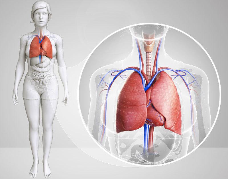 Лучшие дыхательные упражнения для психического и физического здоровья