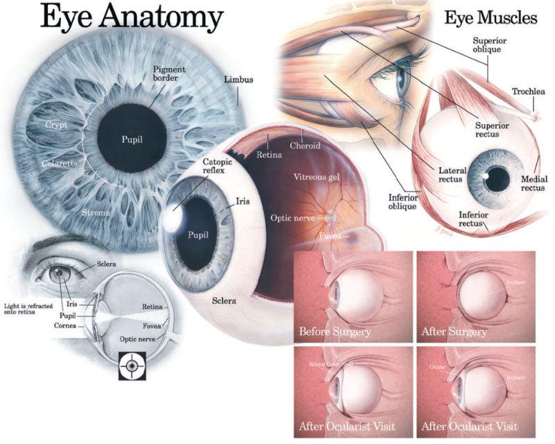 Как оздоровить и укрепить глаза: 2 несложных метода