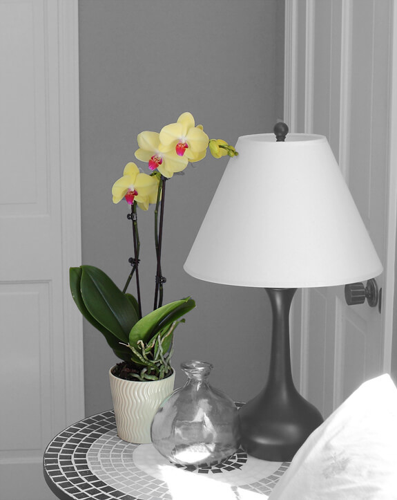Соблюдайте эти 9 правил и ваша орхидея будет цвести круглый год!
