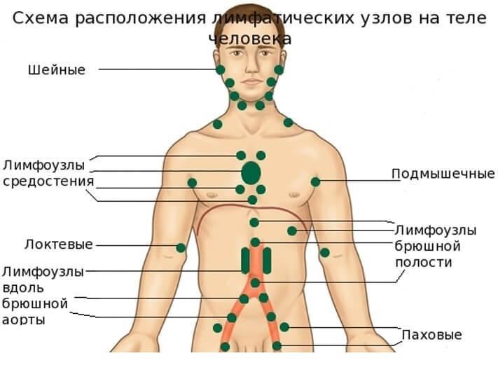 Где в теле человека находятся лимфоузлы