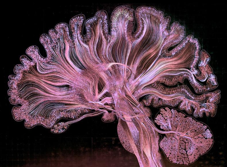 Химия эмоций: все решают гормоны!