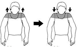 Укрепляем «фундамент» лица: упражнения для мышц шеи