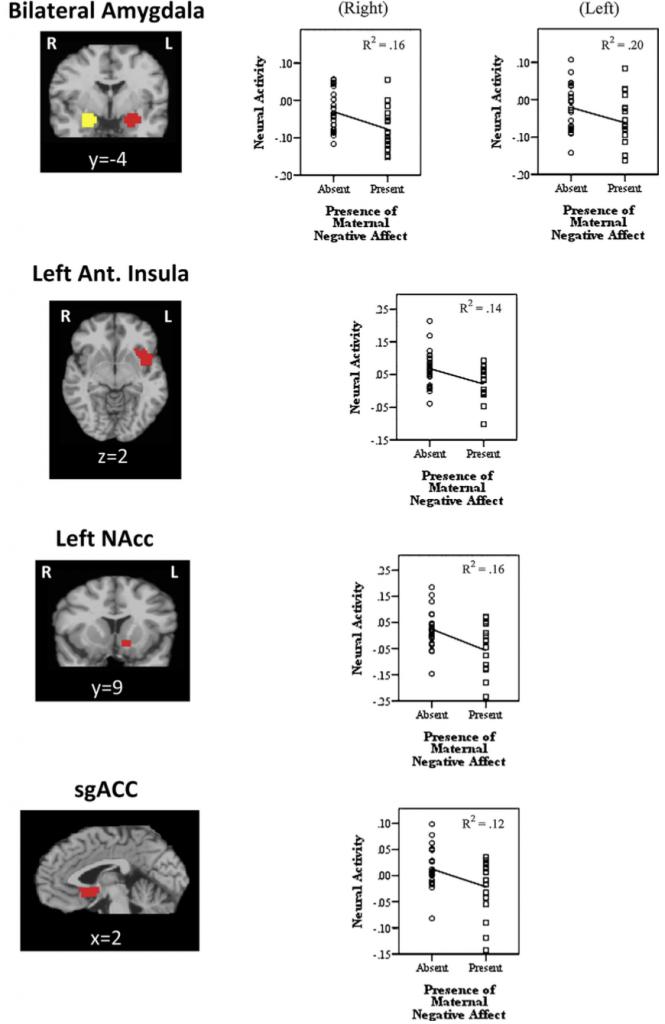 Как мать влияет на активность нейронов в мозге подростка и его социальную адаптацию?