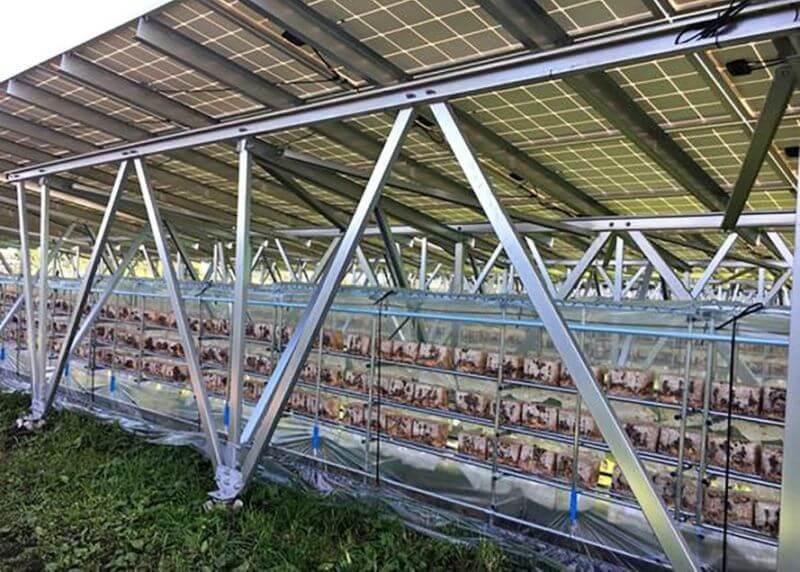 Солнце помогает фермерам