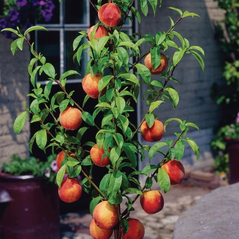 Как правильно разместить плодовые деревья на садовом участке