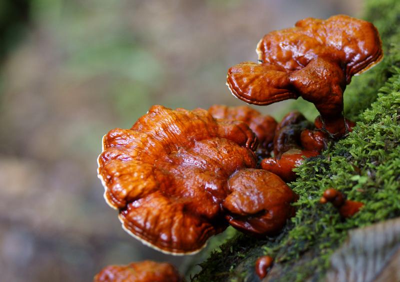 ЛУЧШИЕ адаптогены растительного происхождения
