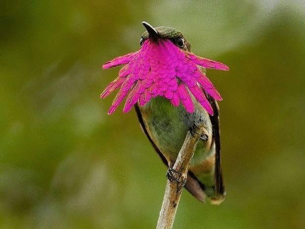 колибри-2