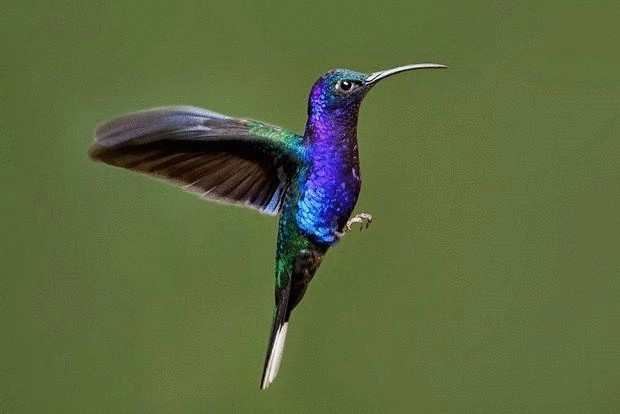 колибри-8