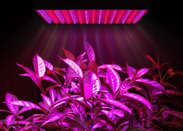 Светодиодное освещение растения