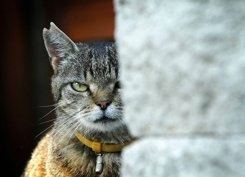 Кошки управляют людьми, а <a href='https://econet.ru/articles/tagged?tag=%D0%BF%D0%B0%D1%80%D0%B0%D0%B7%D0%B8%D1%82%D1%8B' target='_blank'>паразиты</a> управляют всеми