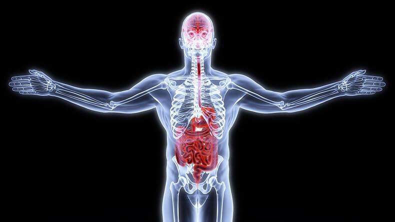 Микрофлора кишечника – главный регулятор мозга
